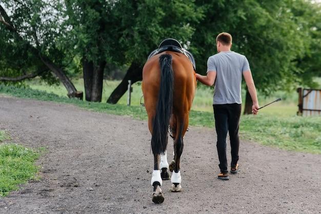 Un jeune homme se lève et regarde un étalon pur-sang sur le ranch