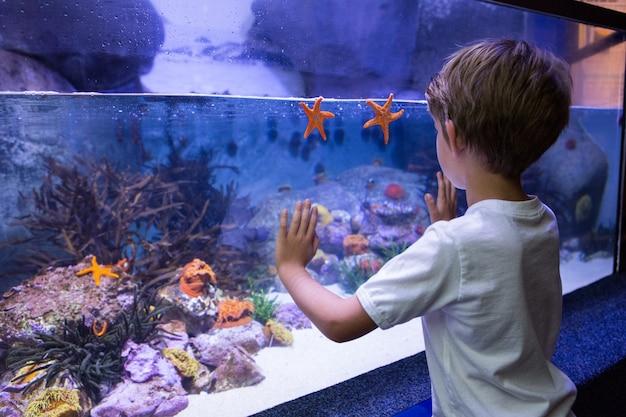 Jeune homme touchant un réservoir d'étoiles de mer