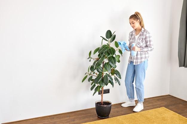 Jeune jardinière essuyant la poussière des feuilles des plantes d'intérieur en prenant soin du jardinage à la maison