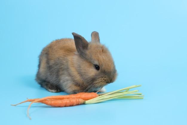 Jeune lapin de pâques brun mignon avec des carottes
