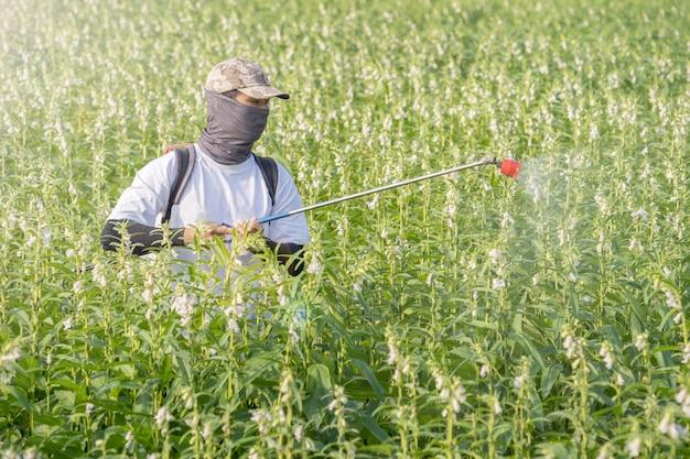 Un jeune maître agriculteur pulvérise des pesticides (produits chimiques agricoles) sur son propre champ de sésame pour prévenir les parasites et les maladies des plantes le matin, gros plan, xigang, tainan, taiwan