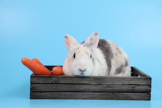 Jeune mignon lapin de pâques blanc et gris dans une boîte en bois et carottes