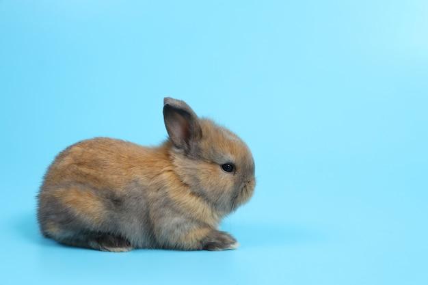 Jeune mignon lapin de pâques brun