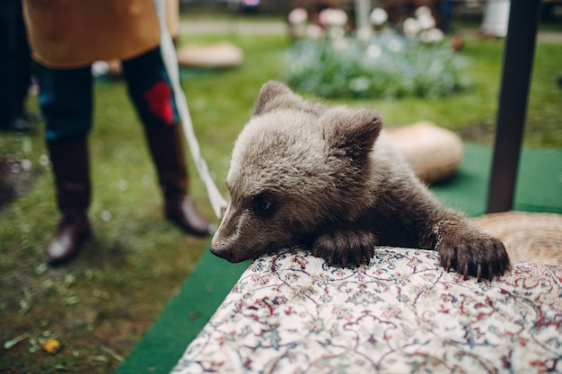 Jeune ourson brun