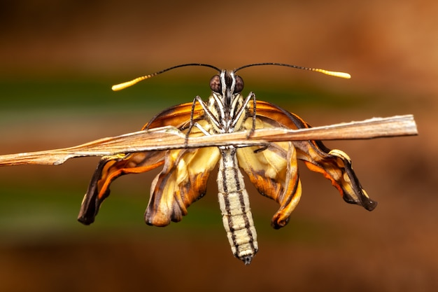 Jeune papillon nouveau-né