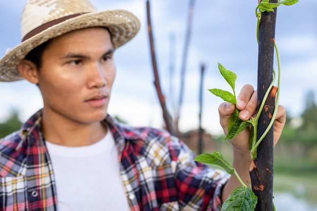 Jeune paysan asiatique utilisant une tablette et vérifiant sa plante ou son légume