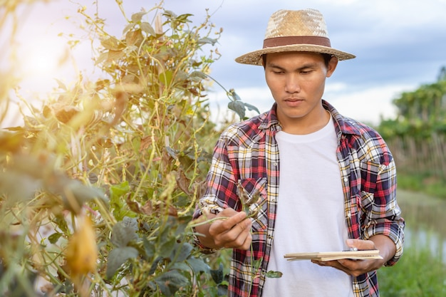 Jeune paysan asiatique vérifiant sa plante ou son légume