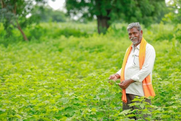 Jeune paysan indien au champ de coton, inde