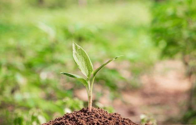 Jeune plante dans la lumière du matin sur fond de nature