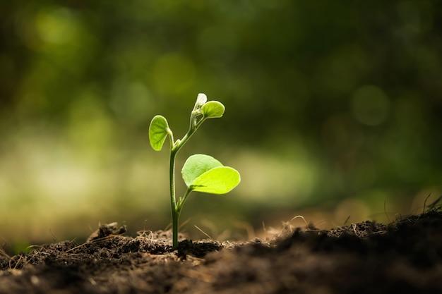 Jeune plante poussant au soleil dans la nature