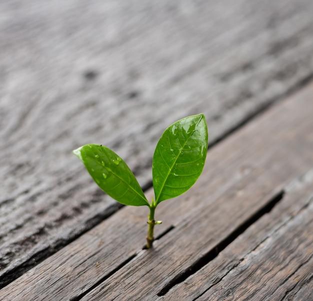Jeune plante poussant dans la lumière du matin avec fond de nature verte bokeh