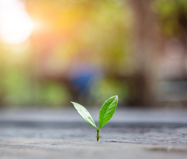 Jeune plante poussant dans la lumière du matin avec la nature verte bokeh