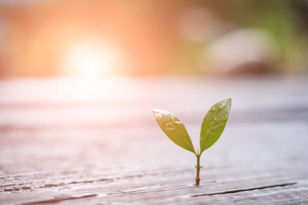 Jeune plante poussant dans la lumière du matin avec la nature verte.