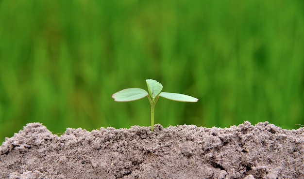 Jeune plante poussant dans un sol noir sur fond de nature verdoyante, jeune plante placée dans le bas middl