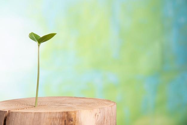 Jeune plante pousse de l'intérieur vieil arbre