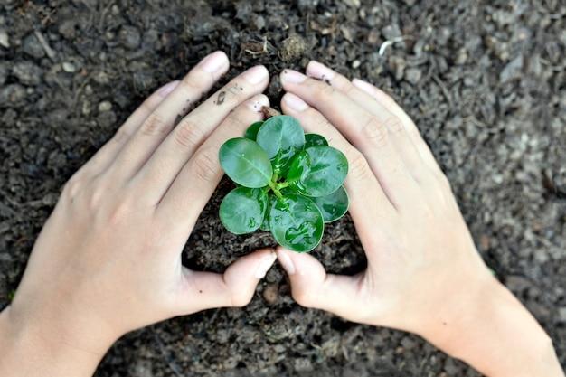 Jeune plante verte, croissance, concept d'écologie.
