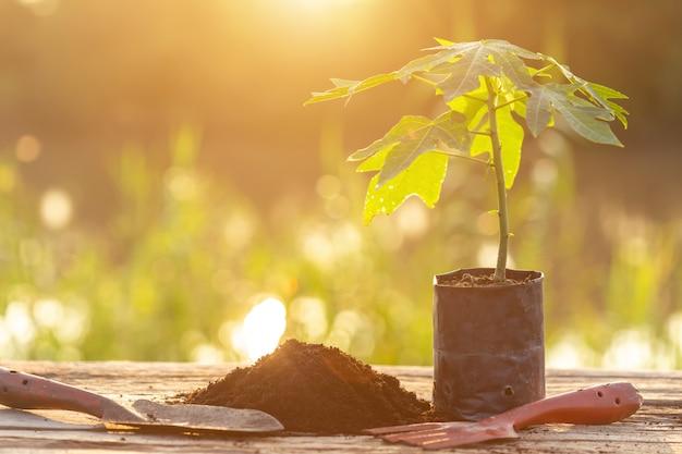 Jeune plante verte en plastique à planter sur une table en bois