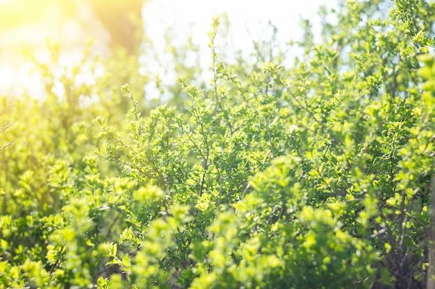 Jeune pousse d'un arbre, avec une douce lumière du soleil