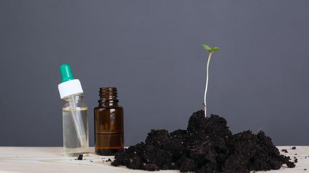 Jeune pousse de marijuana médicale sur fond gris avec des bouteilles d'huiles de cannabis en gros plan.