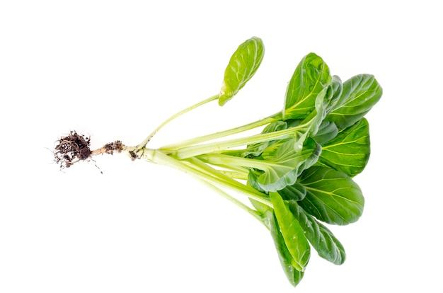 Jeune pousse verte, chou avec racine, isolé sur blanc.