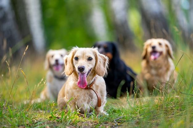 Les jeunes chiens posent. de mignons toutous ou animaux de compagnie ont l'air heureux sur fond de nature.