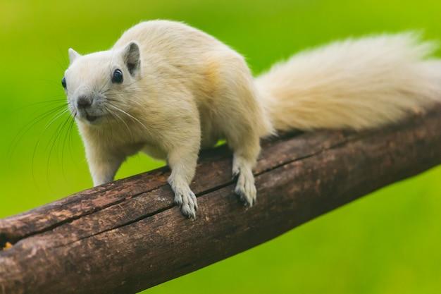 Les jeunes écureuils courent autour des arbres, profitez