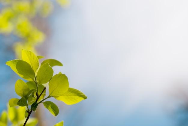 Jeunes feuilles vertes dans le ciel bleu foncé