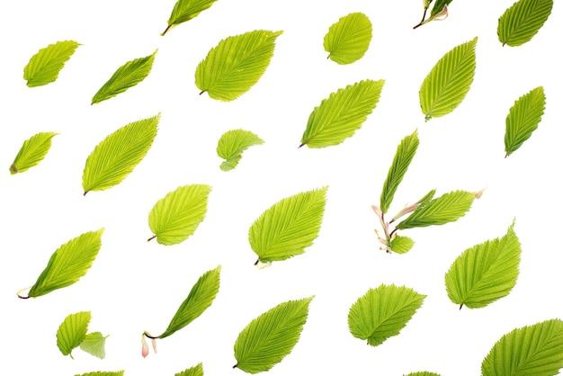 Jeunes feuilles vertes fraîches. beau fond saisonnier de printemps.