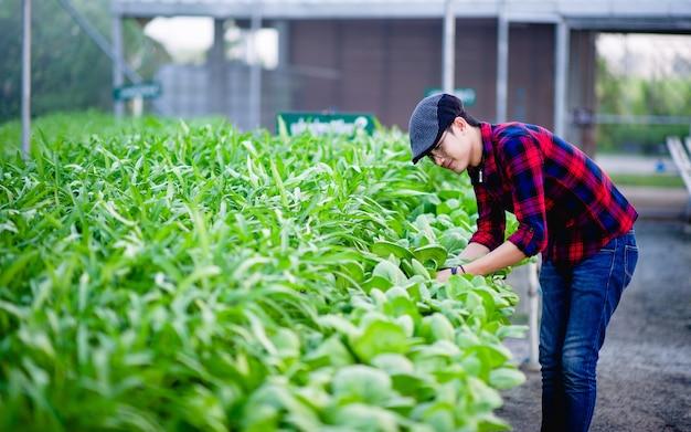 Jeunes hommes et légumes biologiques vérifiant heureusement les parcelles de légumes