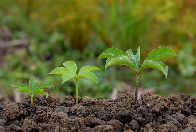 Jeunes plantes poussant dans la nature du sol sur fond vert et jaune