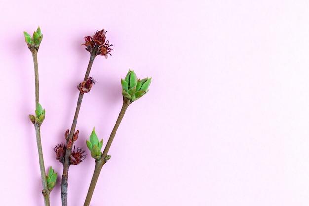 Jeunes pousses sur fond rose clair.