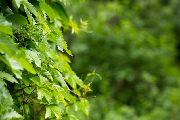 Jeunes pousses d'une plante verte, fond naturel