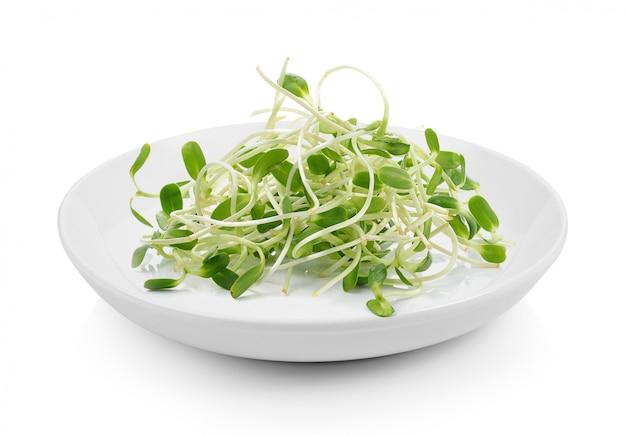 Jeunes pousses de tournesol vert en plaque sur une surface blanche