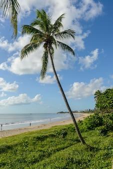 Joao pessoa, paraiba, brésil le 25 mai 2021. plage de manaira avec cocotiers.