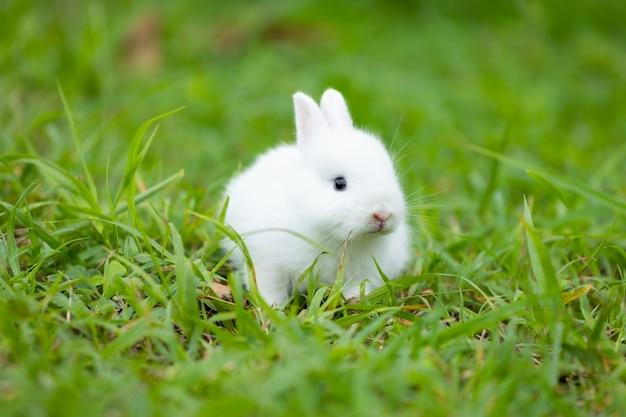 Joli bébé lapin blanc dans l'herbe verte du pré. amitié avec le lapin de pâques mignon.