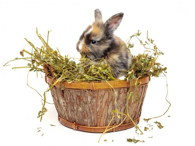 Joli bébé lapin dans un panier en bois avec de l'herbe sèche