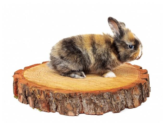 Joli bébé lapin sur pin scié en bois