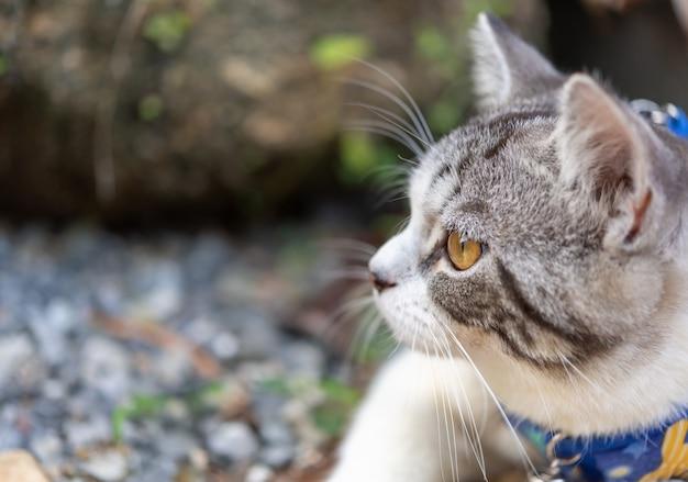 Joli chat avec de beaux yeux jaunes portant un collier pour jouer en toute sécurité dans un jardin extérieur