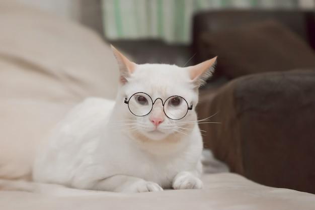 Joli chat blanc allongé sur un canapé. fluffy pet regarde curieusement.