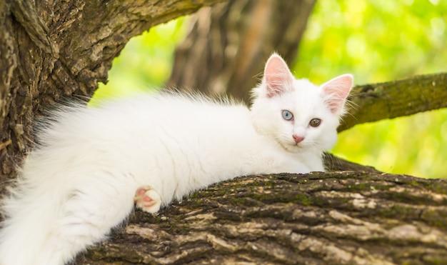 Joli chat blanc sur un arbre.