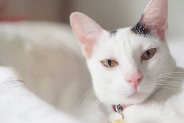 Joli chat blanc au lit. fluffy pet regarde curieusement. chaton errant dormir sur le lit.