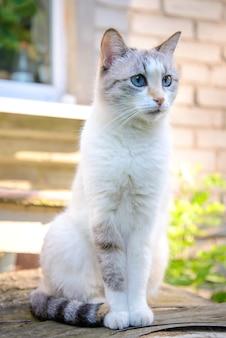 Joli chat blanc aux yeux bleus assis dans le jardin en été