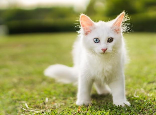 Joli chat blanc sur la pelouse