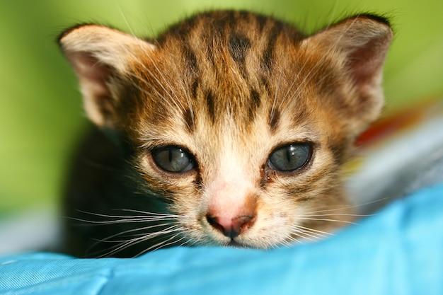 Joli chat et chaton mignon