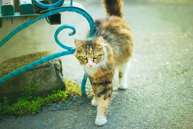 Un joli chat domestique blanc moelleux gris brun à l'extérieur ou dans un parc