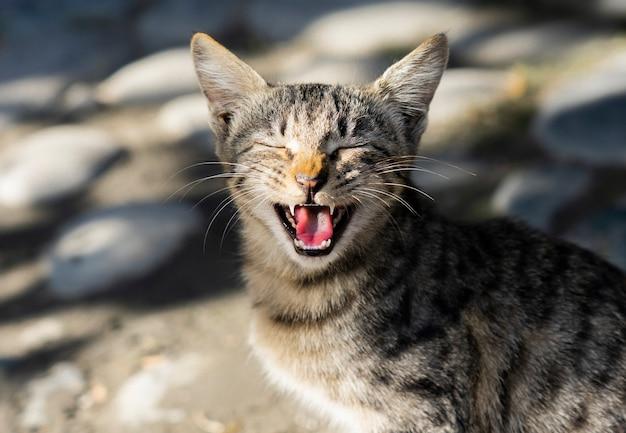 Joli chat errant solitaire bâillant avec la bouche grande ouverte
