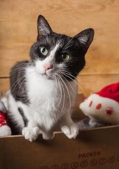 Joli chat de noël curieux avec des trucs de noël décoratifs