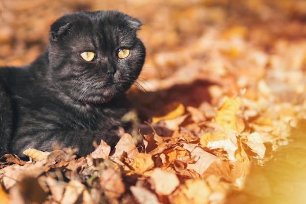 Joli chat noir en automne dans le jardin
