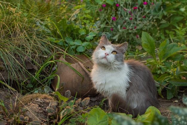 Joli chaton gris à l'extérieur au coucher du soleil
