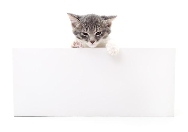 Joli chaton, d'un signe vierge, isolé sur fond blanc